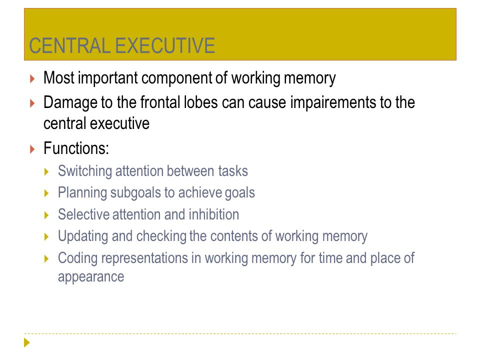 CENTRAL EXECUTIVE Most important component of working memory