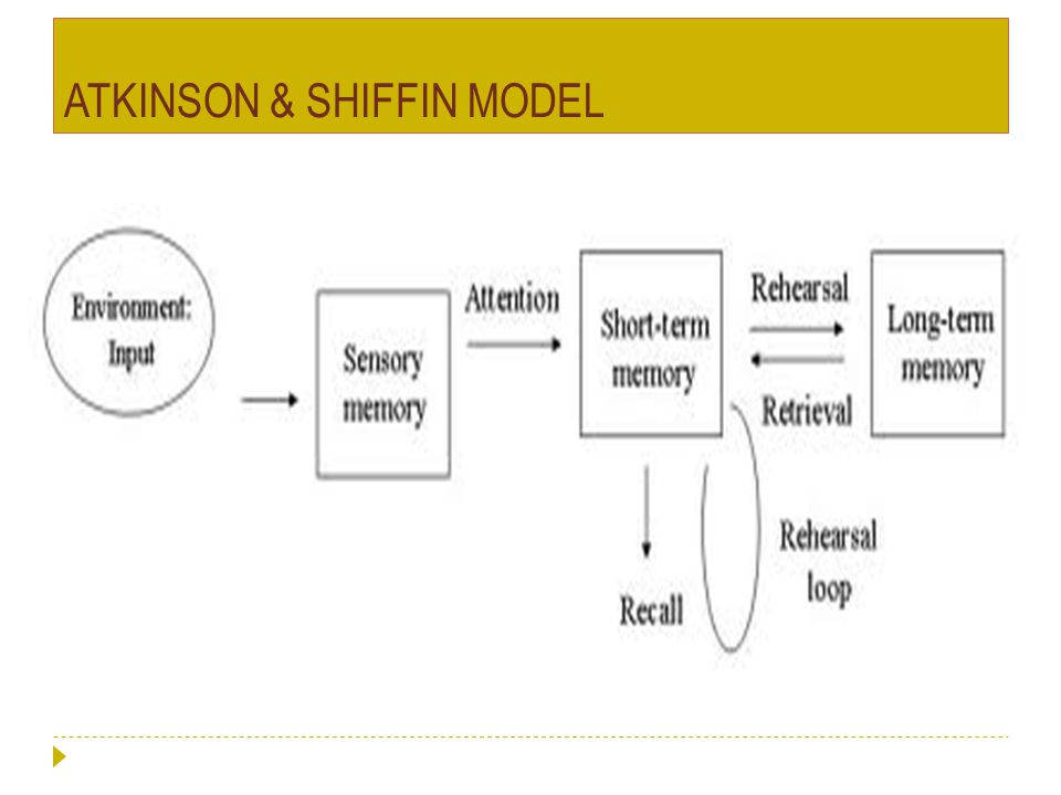 ATKINSON & SHIFFIN MODEL