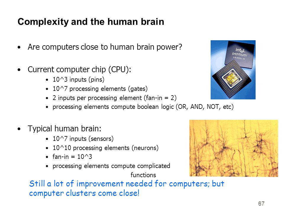 Complexity and the human brain