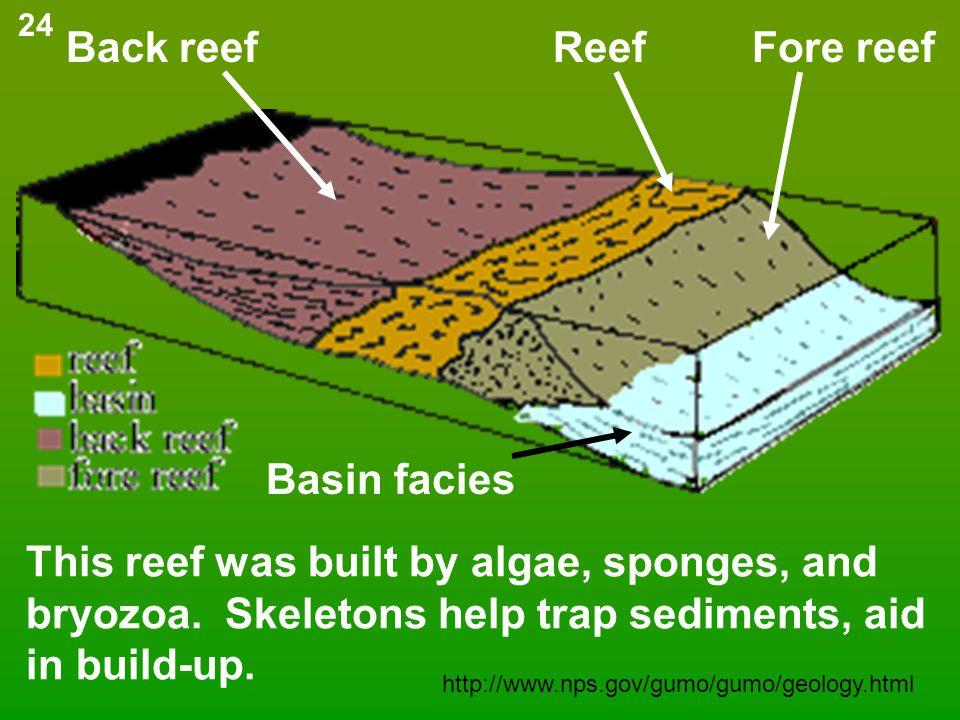 Back reef Reef Fore reef