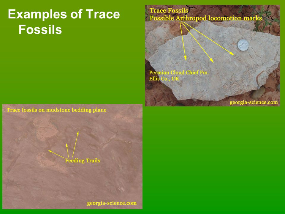 Examples of Trace Fossils