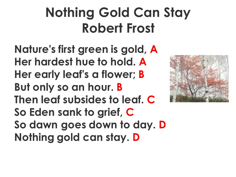 Nothing Gold Can Stay Robert Frost