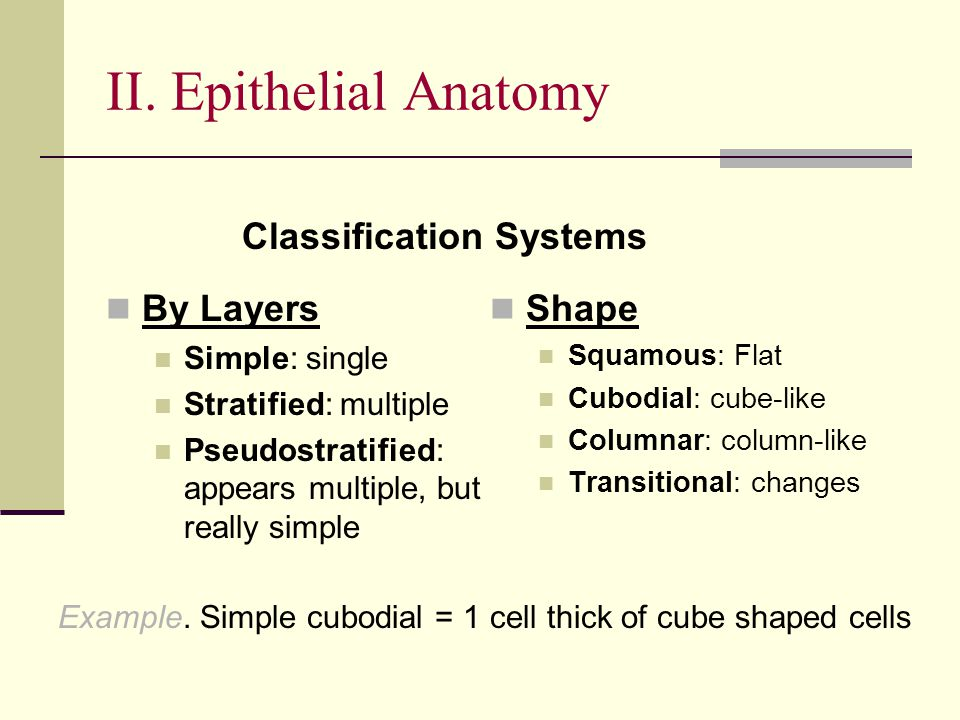 II. Epithelial Anatomy Classification Systems By Layers Shape