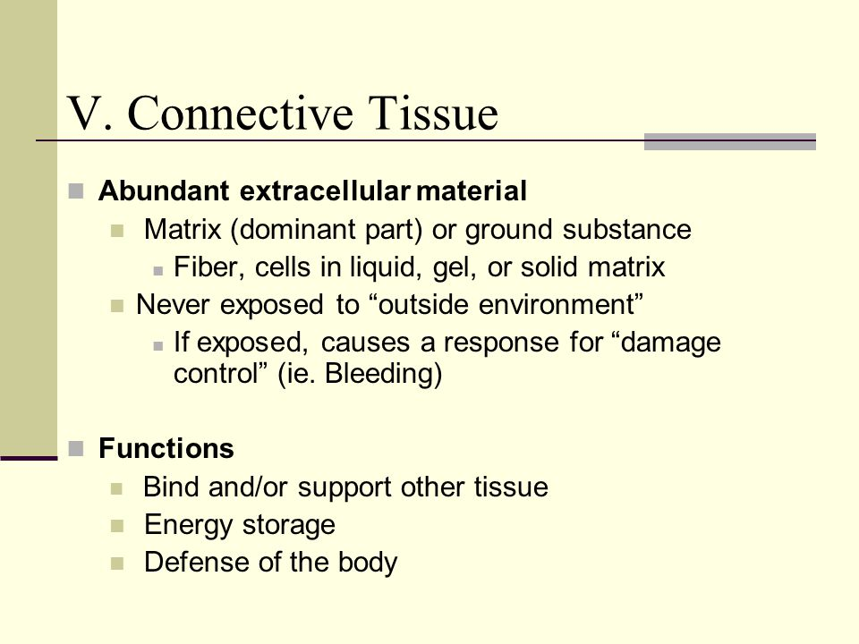 V. Connective Tissue Abundant extracellular material