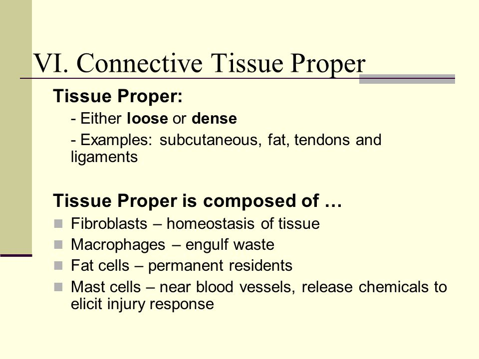 VI. Connective Tissue Proper