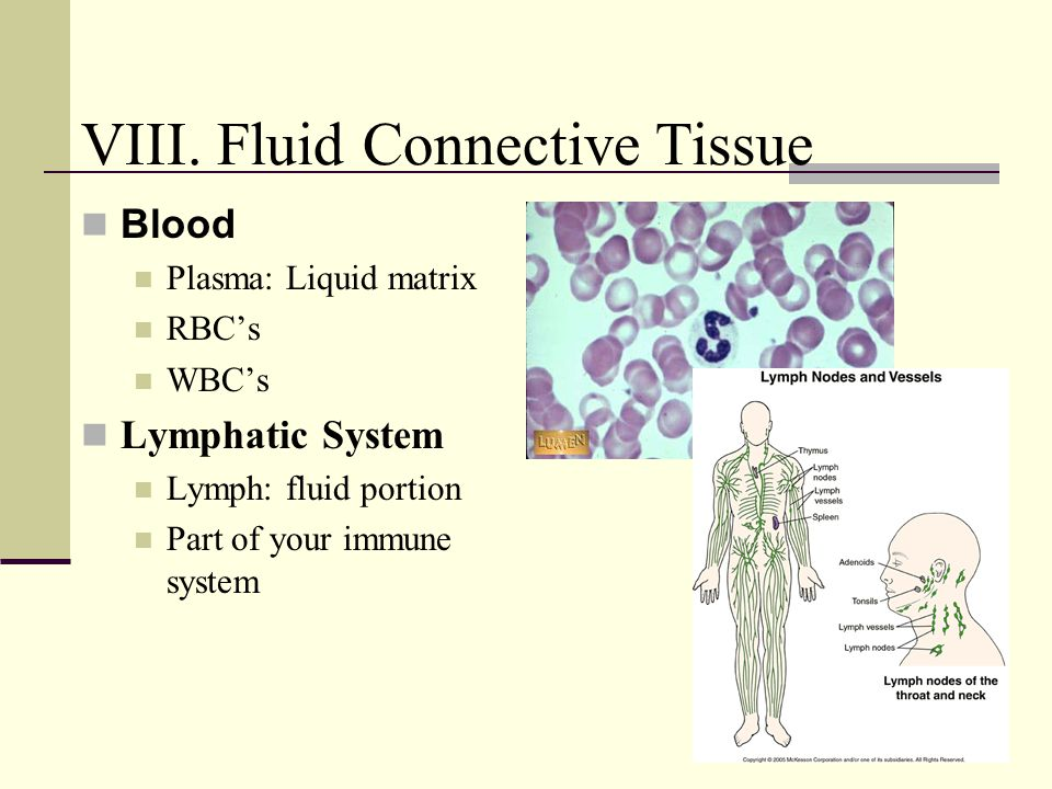 VIII. Fluid Connective Tissue