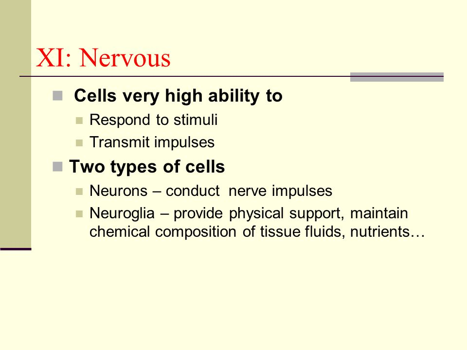 XI: Nervous Cells very high ability to Two types of cells