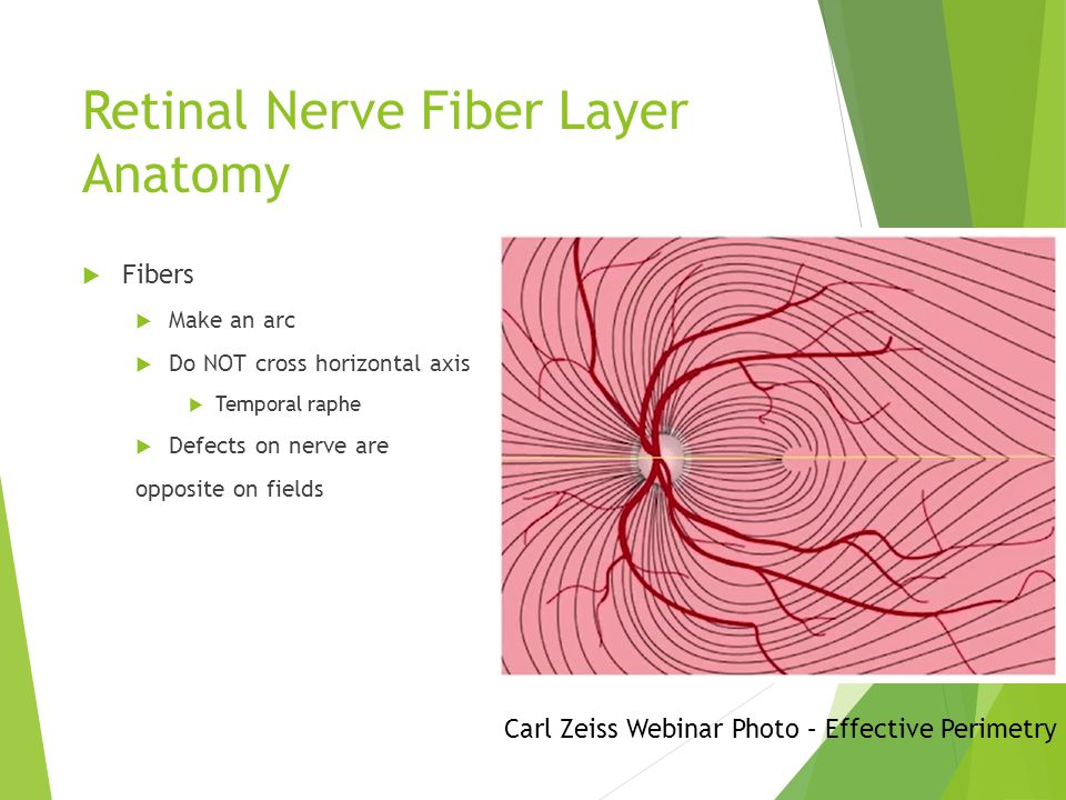 Retinal Nerve Fiber Layer Anatomy