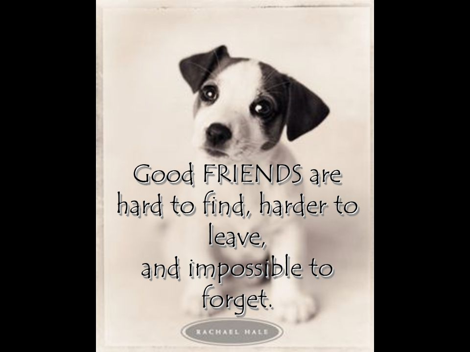Good FRIENDS are hard to find, harder to leave,