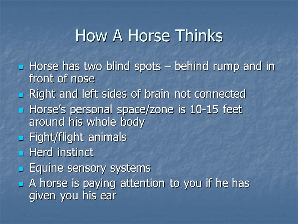 How A Horse Thinks Horse has two blind spots – behind rump and in front of nose. Right and left sides of brain not connected.