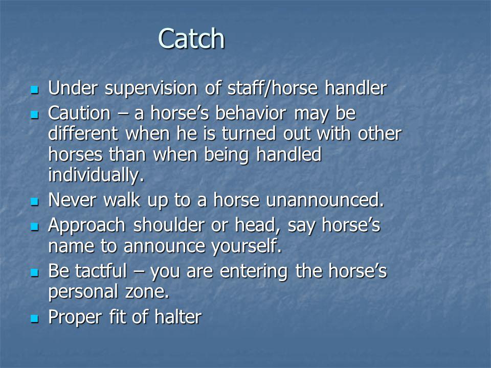 Catch Under supervision of staff/horse handler