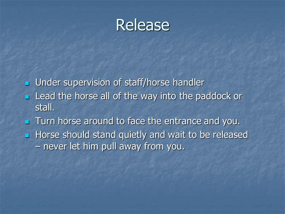 Release Under supervision of staff/horse handler