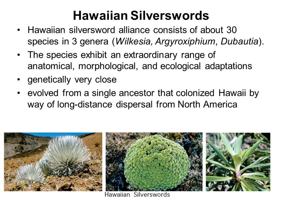 Hawaiian Silverswords