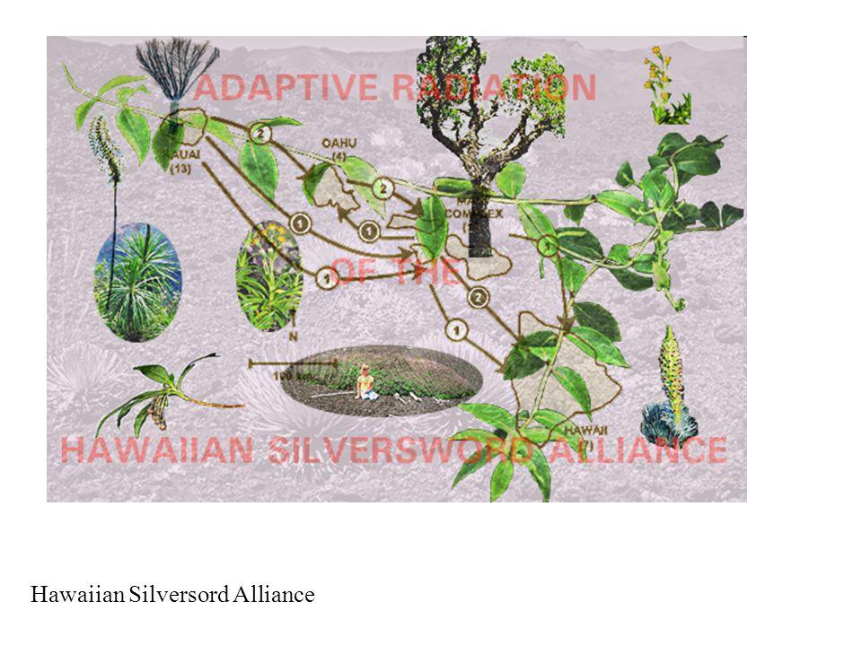 Hawaiian Silversord Alliance