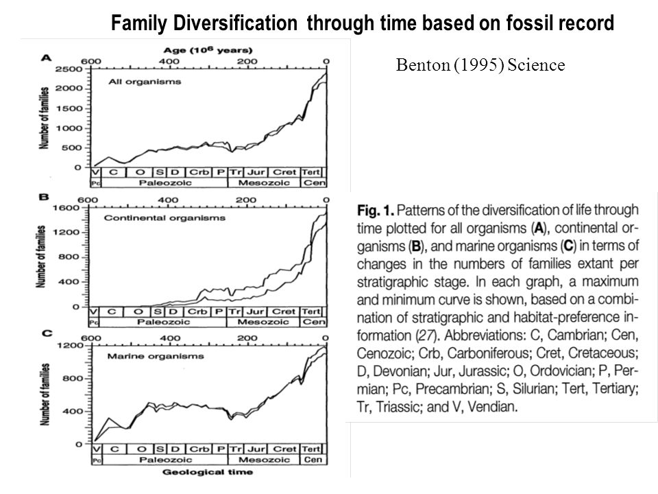 Family Diversification through time based on fossil record