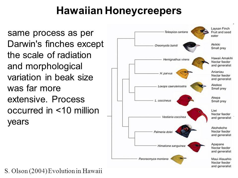 Hawaiian Honeycreepers