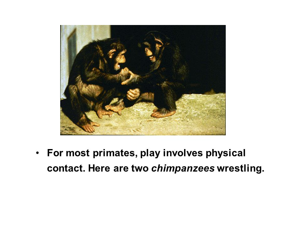 For most primates, play involves physical contact