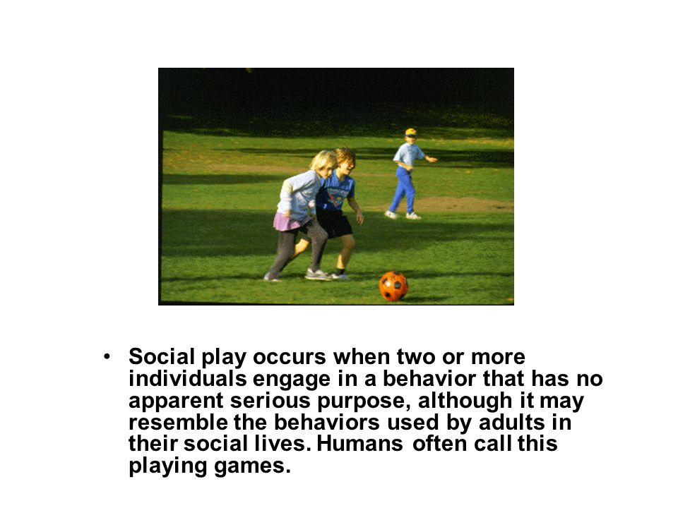 Social play occurs when two or more individuals engage in a behavior that has no apparent serious purpose, although it may resemble the behaviors used by adults in their social lives.