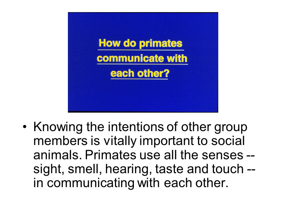 Knowing the intentions of other group members is vitally important to social animals.