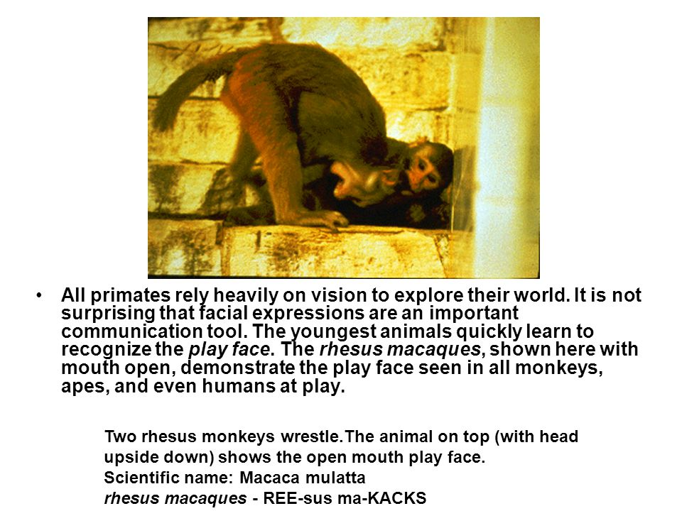 All primates rely heavily on vision to explore their world