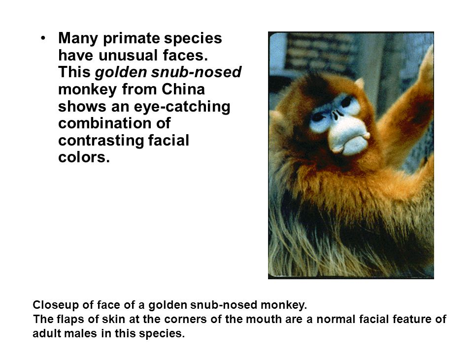 Many primate species have unusual faces