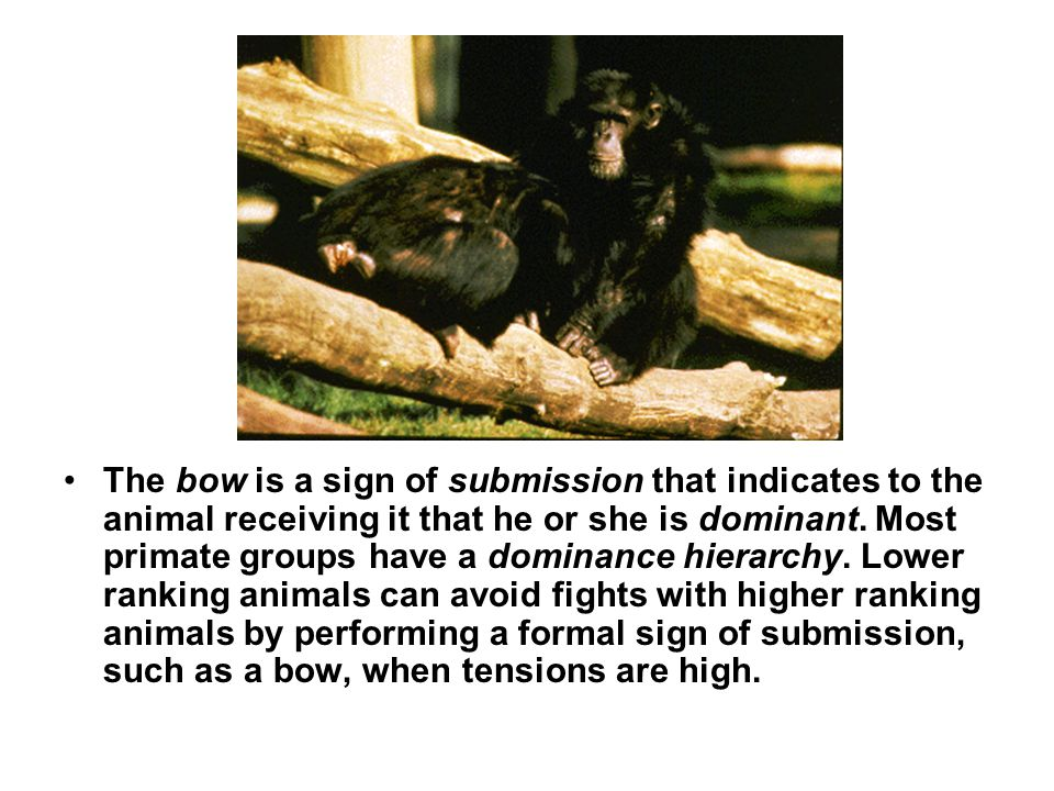 The bow is a sign of submission that indicates to the animal receiving it that he or she is dominant.