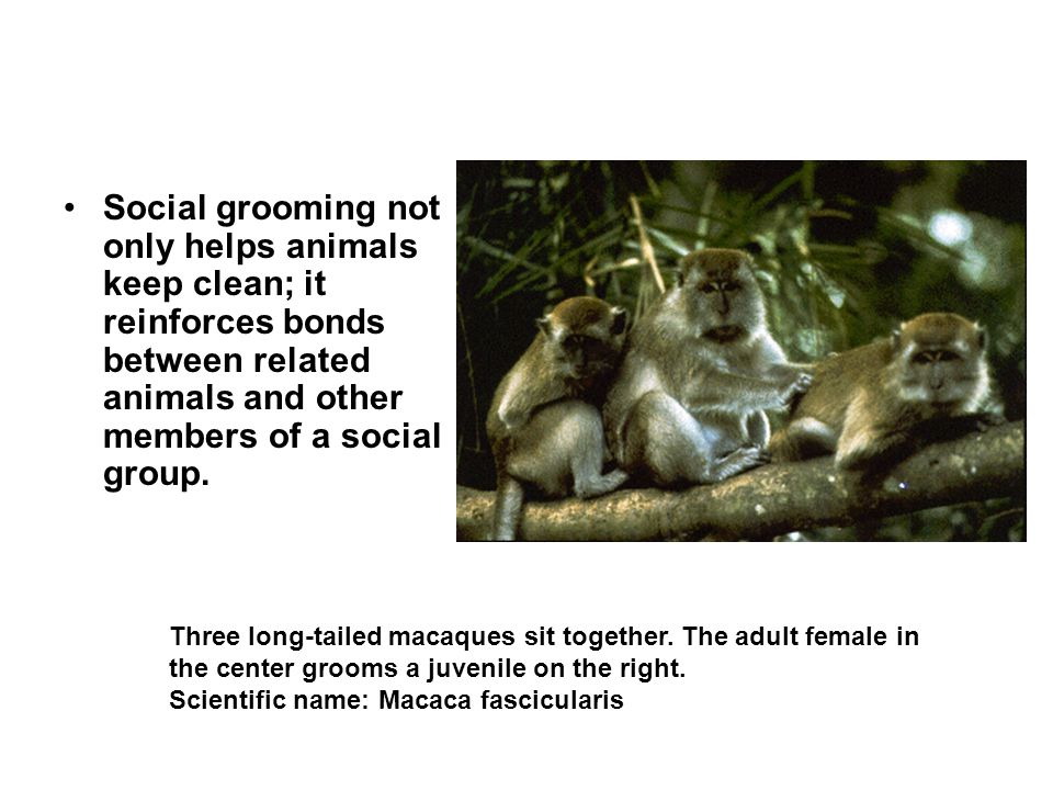 Social grooming not only helps animals keep clean; it reinforces bonds between related animals and other members of a social group.