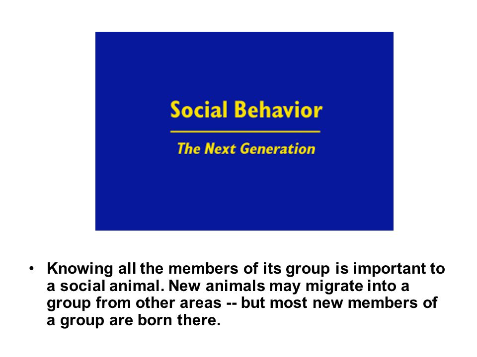 Knowing all the members of its group is important to a social animal