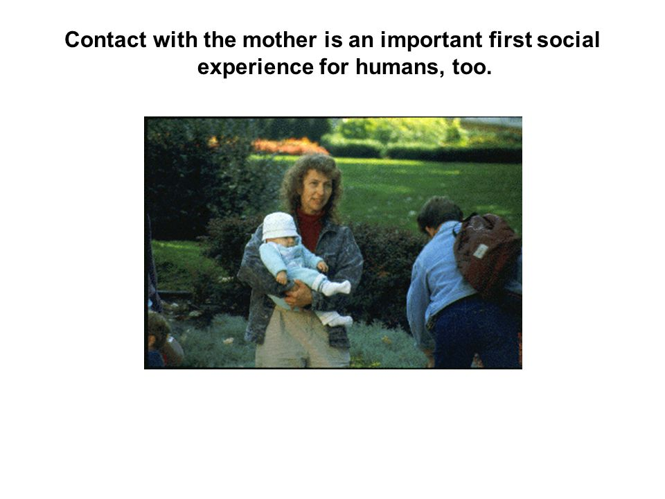 Contact with the mother is an important first social experience for humans, too.