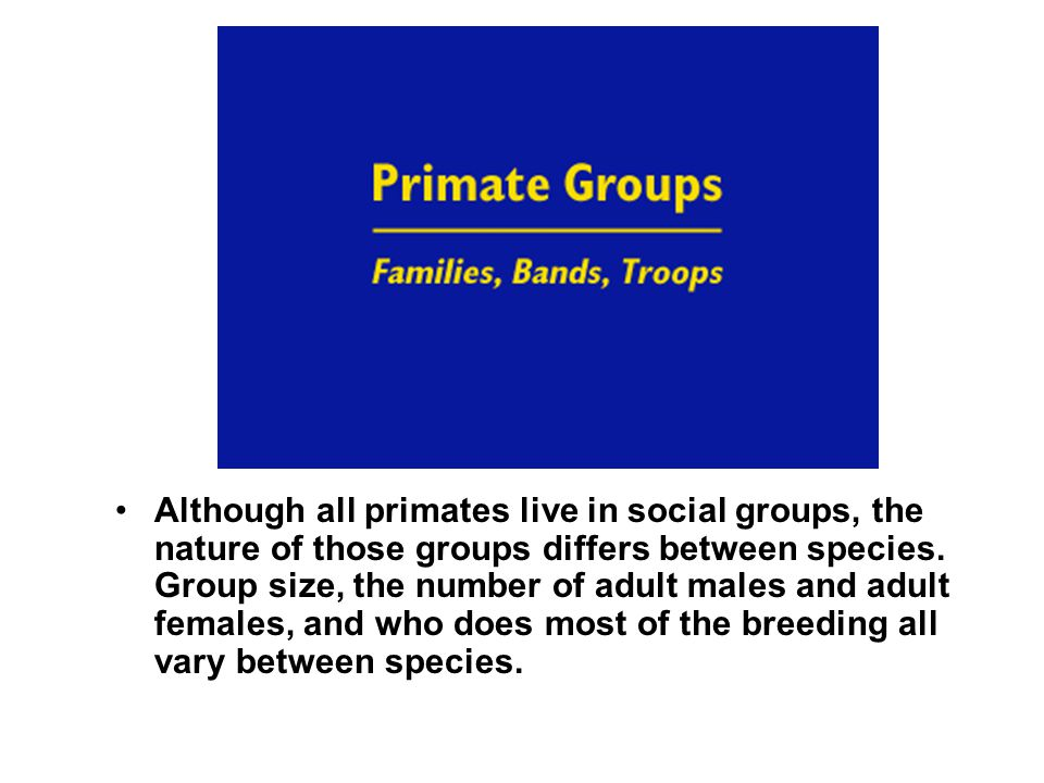 Although all primates live in social groups, the nature of those groups differs between species.