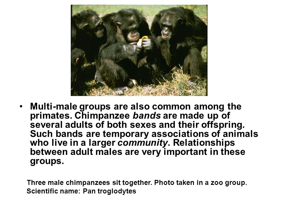 Multi-male groups are also common among the primates