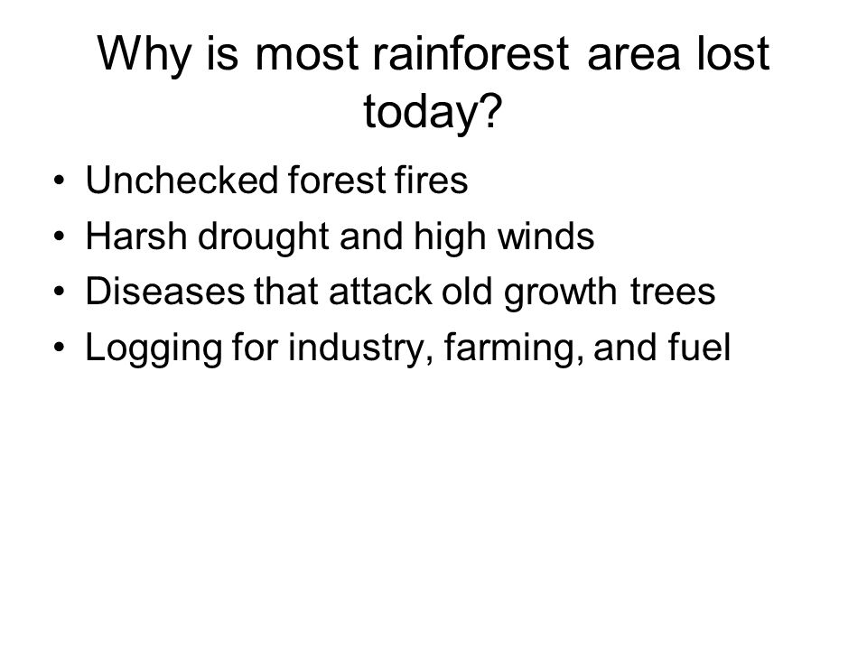 Why is most rainforest area lost today