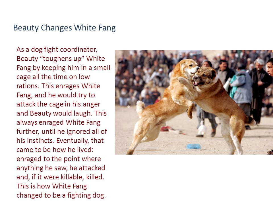 Beauty Changes White Fang