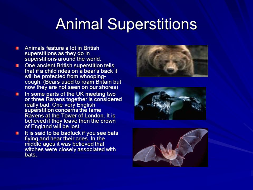 Animal Superstitions Animals feature a lot in British superstitions as they do in superstitions around the world.