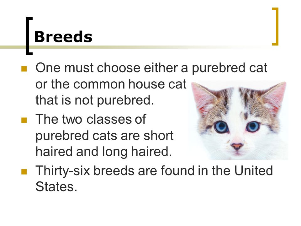 Breeds One must choose either a purebred cat or the common house cat that is not purebred.