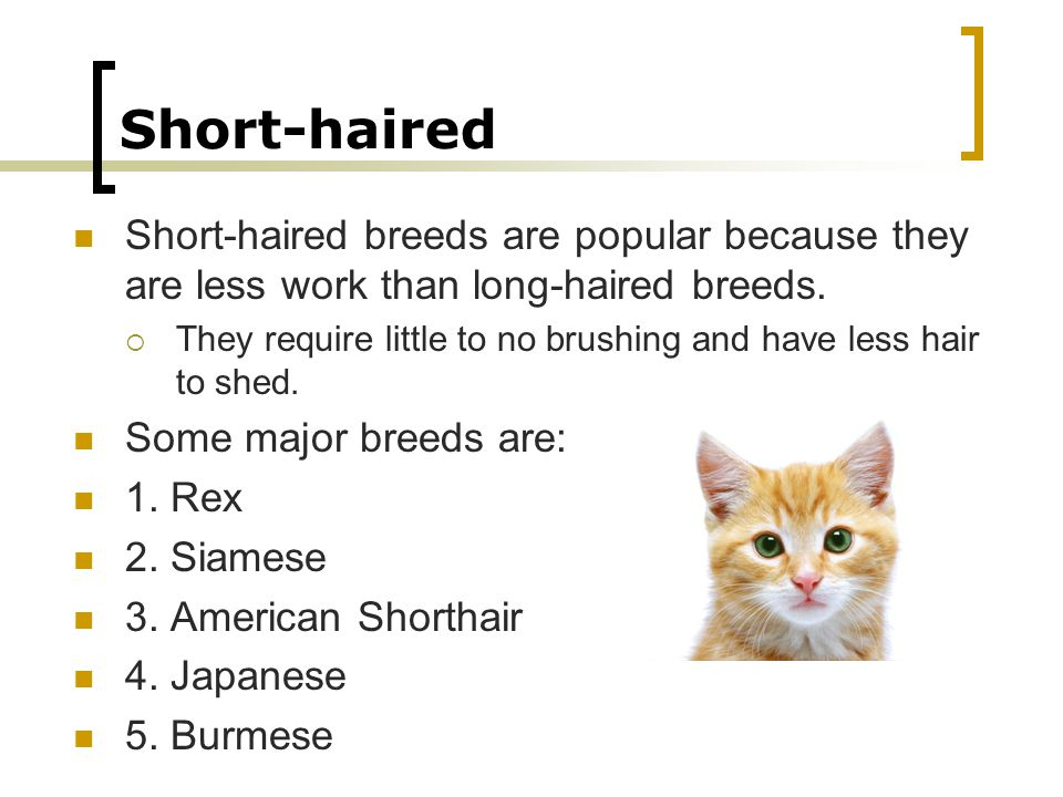 Short-haired Short-haired breeds are popular because they are less work than long-haired breeds.