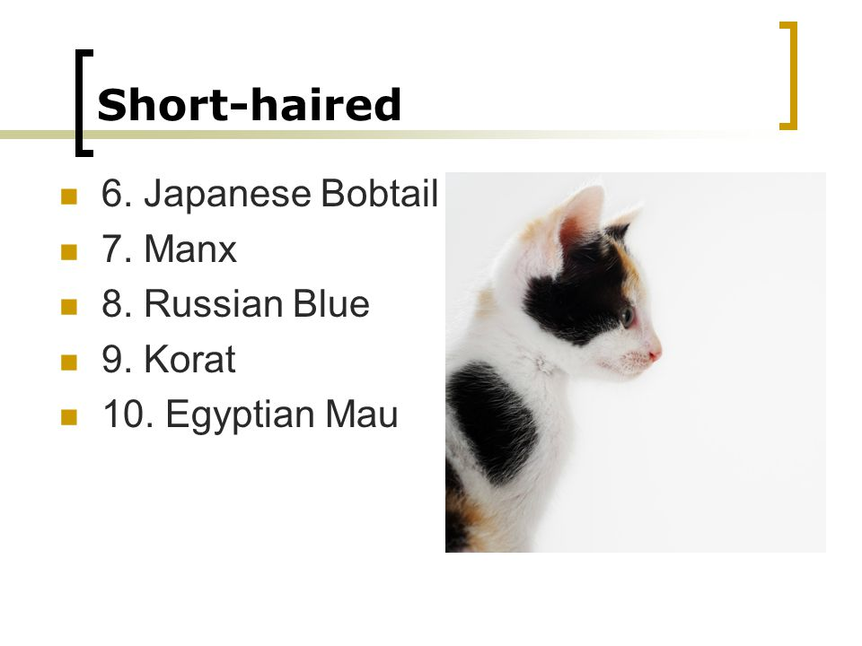Short-haired 6. Japanese Bobtail 7. Manx 8. Russian Blue 9. Korat