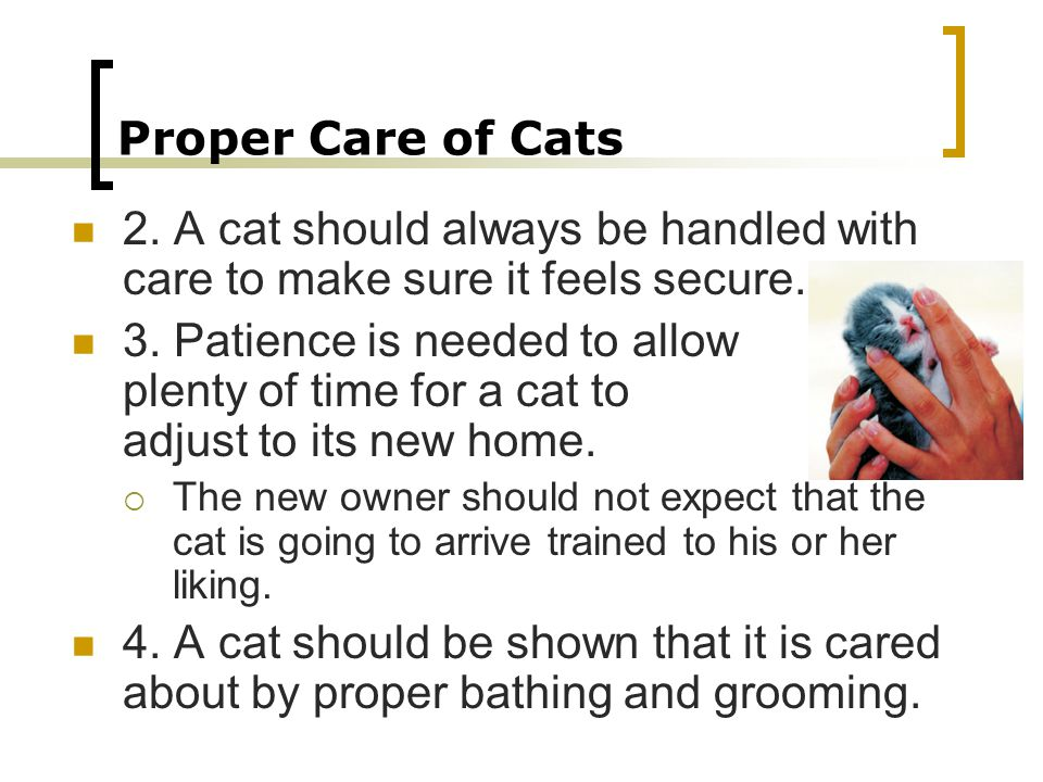 Proper Care of Cats 2. A cat should always be handled with care to make sure it feels secure.