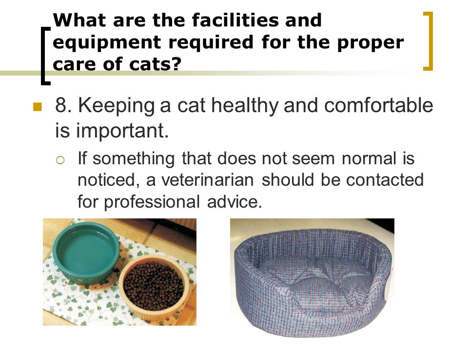 8. Keeping a cat healthy and comfortable is important.