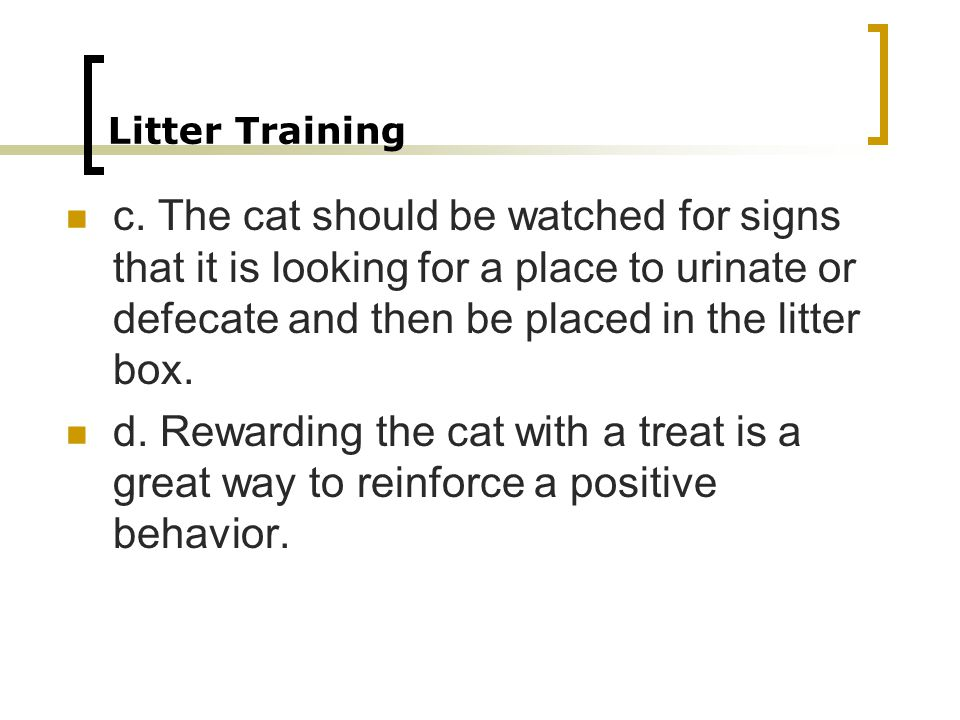 Litter Training c. The cat should be watched for signs that it is looking for a place to urinate or defecate and then be placed in the litter box.