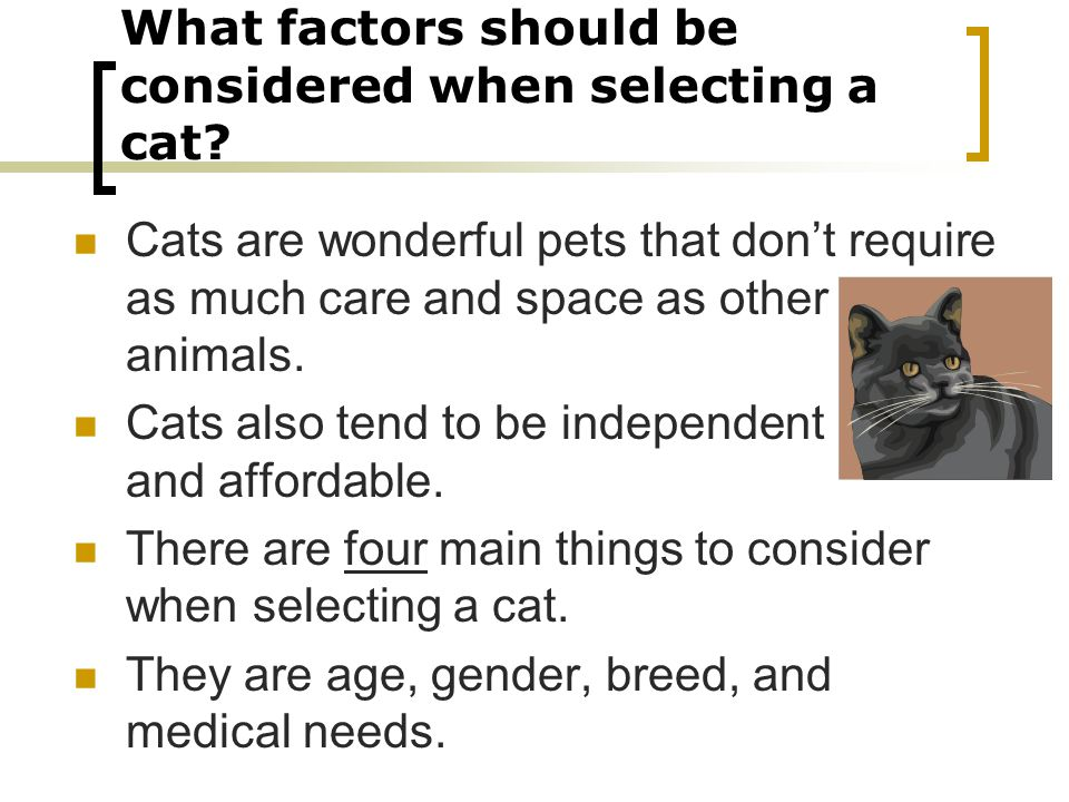 What factors should be considered when selecting a cat