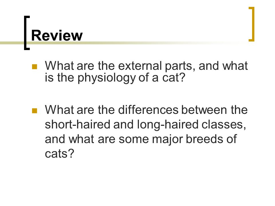 Review What are the external parts, and what is the physiology of a cat