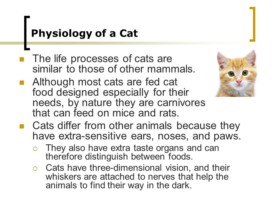 The life processes of cats are similar to those of other mammals.