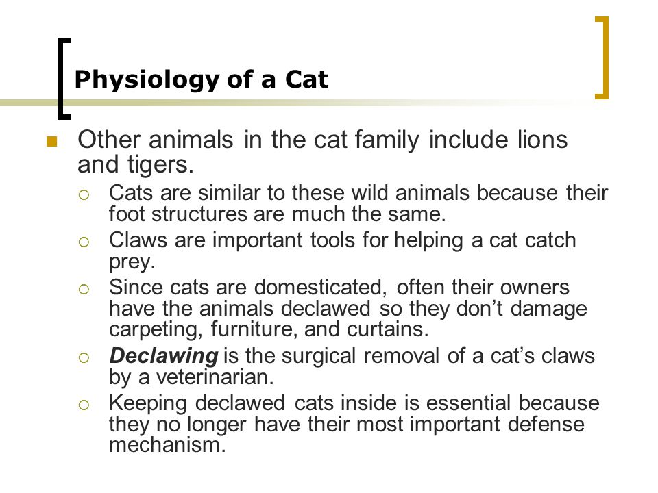 Other animals in the cat family include lions and tigers.