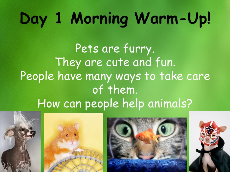 Day 1 Morning Warm-Up! Pets are furry. They are cute and fun.