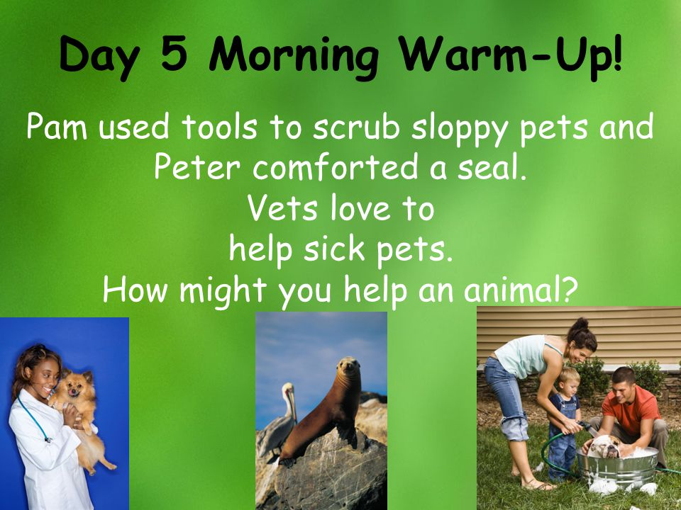 Day 5 Morning Warm-Up! Pam used tools to scrub sloppy pets and Peter comforted a seal. Vets love to.