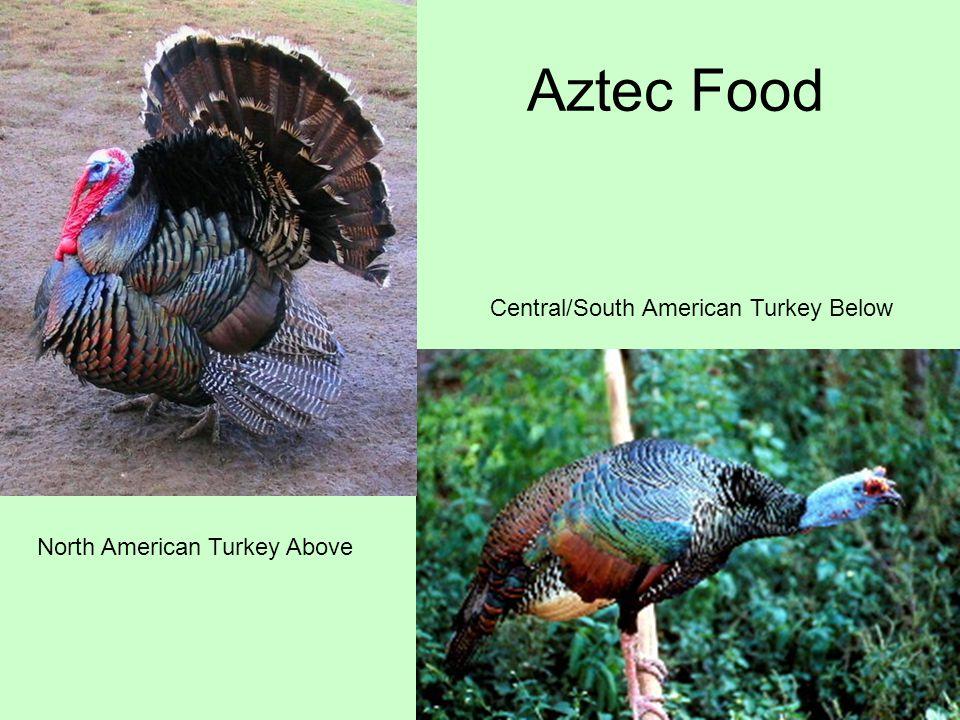 Aztec Food Central/South American Turkey Below