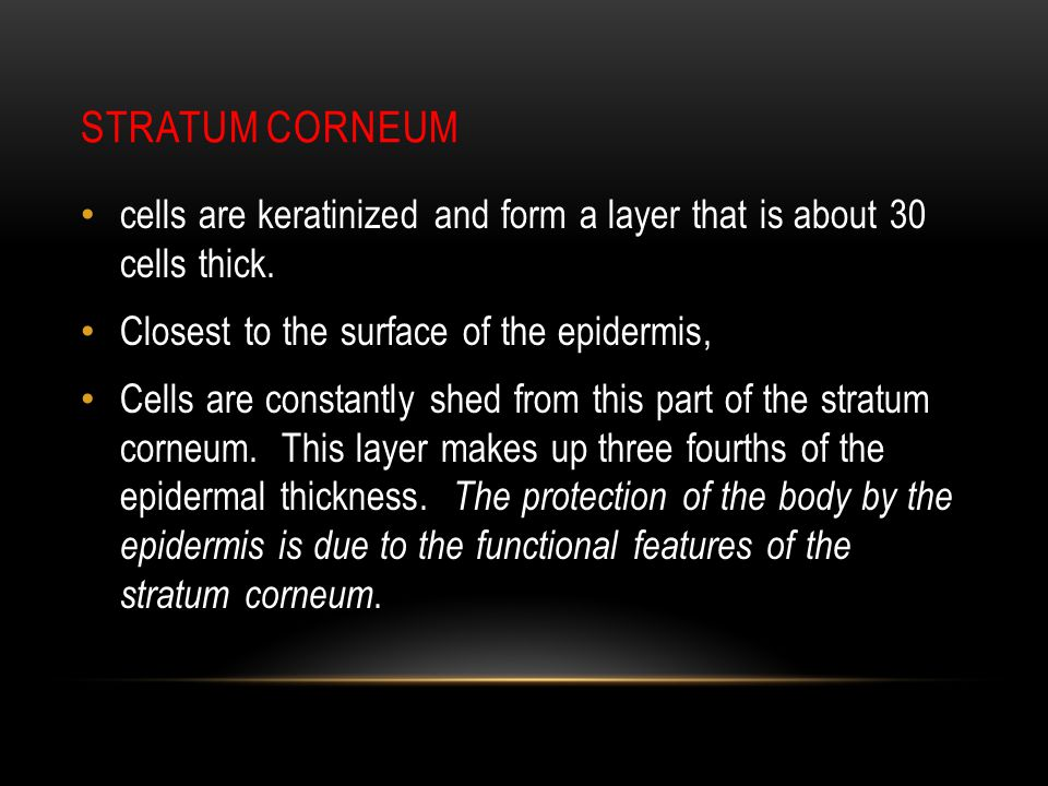 stratum corneum cells are keratinized and form a layer that is about 30 cells thick. Closest to the surface of the epidermis,