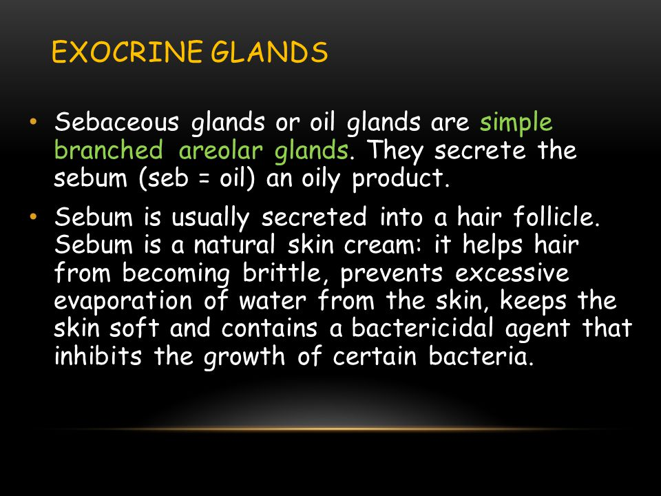 Exocrine Glands Sebaceous glands or oil glands are simple branched areolar glands. They secrete the sebum (seb = oil) an oily product.