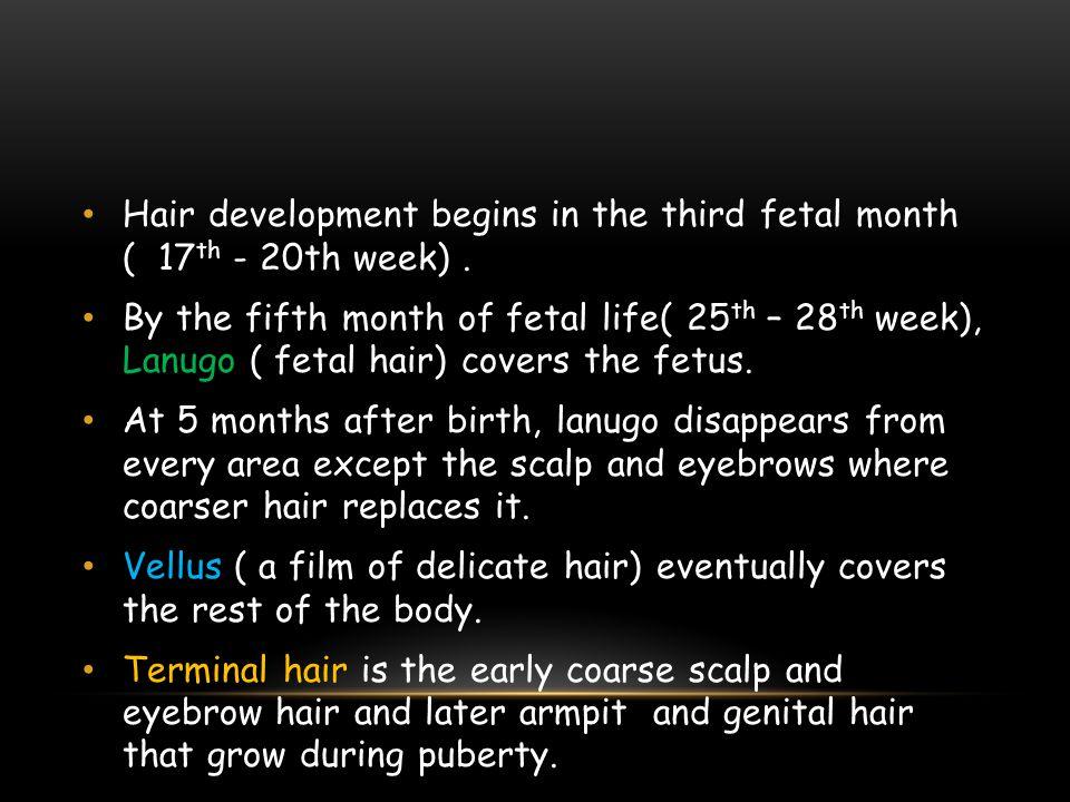 Hair development begins in the third fetal month ( 17th - 20th week) .